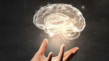 مغز انسان و اجزای آن سلطان سلامتی ورزش زبان خوراک مناسب تغذیه هوش ذهن باهوش فکر تفکر آلزایمر مدیتیشن خواب بازی خاطرات