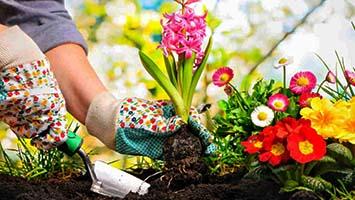در این ویدیو شما با روش های مختلفی برای خلاقیت در باغبانی و رشد و نگهداری از گیاهان آشنا خواهید شد.