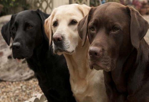 روش های آموزش سگ ارتباط با سگ چگونه سگ را آموزش دهیم روش های متداول در تربیت سگ ها تمرین با سگ تمرین های کلیکر آلفا شدن الگو برداری DOG TRAINING