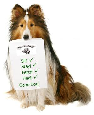 آموزش سگ ، چگونه خودم سگم را آموزش دهم؟ اهمیت آموزش سگ ، آیا آموزش سگ ها به مربی نیاز دارد؟ سگ چگونه یاد میگیرد؟ آموزش و رابطه قوی تر dog training